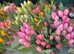 assorted cut tulips