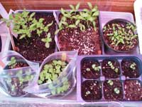 new seedlings