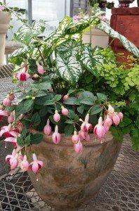Shade garden planter