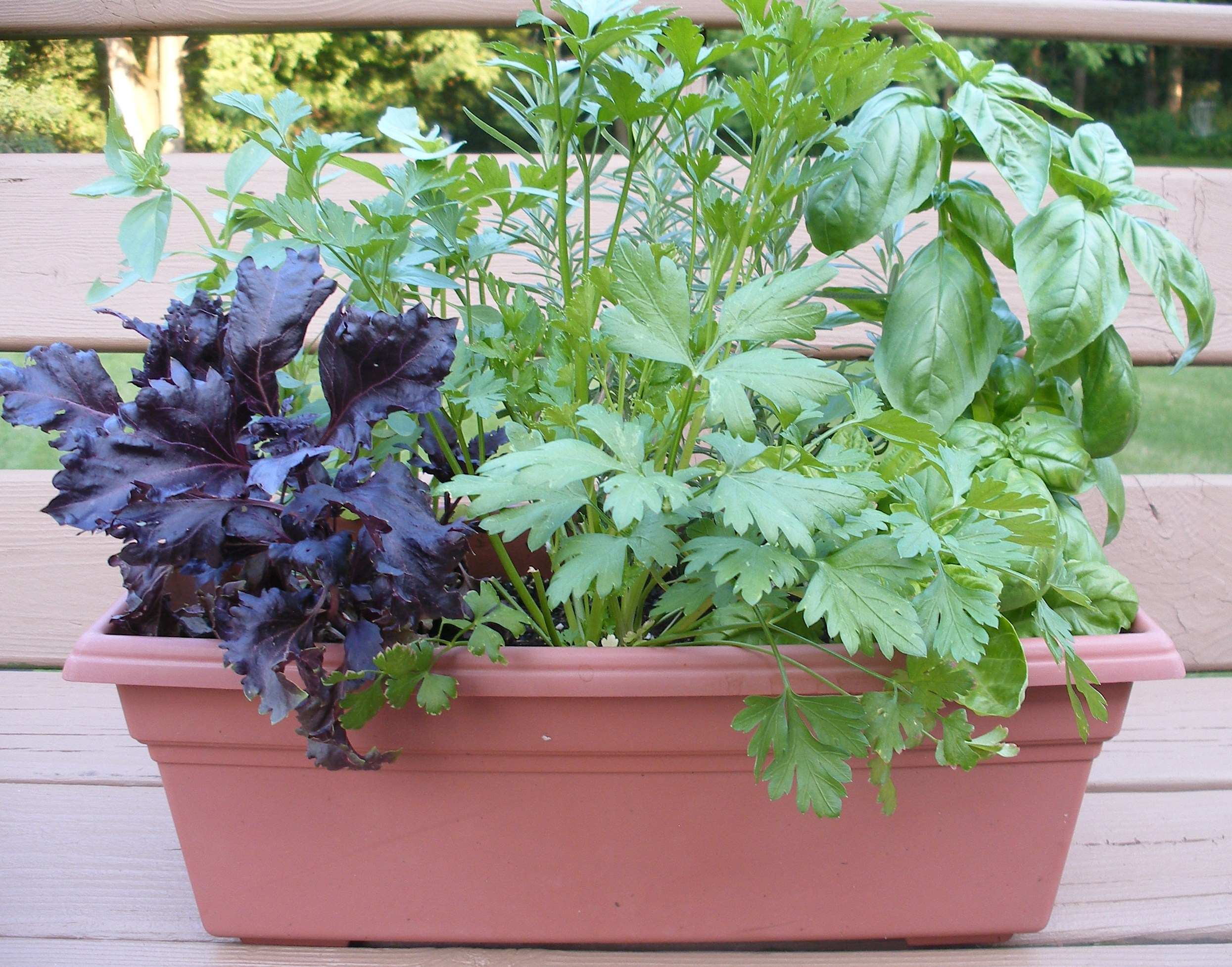 Growing herbs - Tips planting herbs lovage parsley dill ...