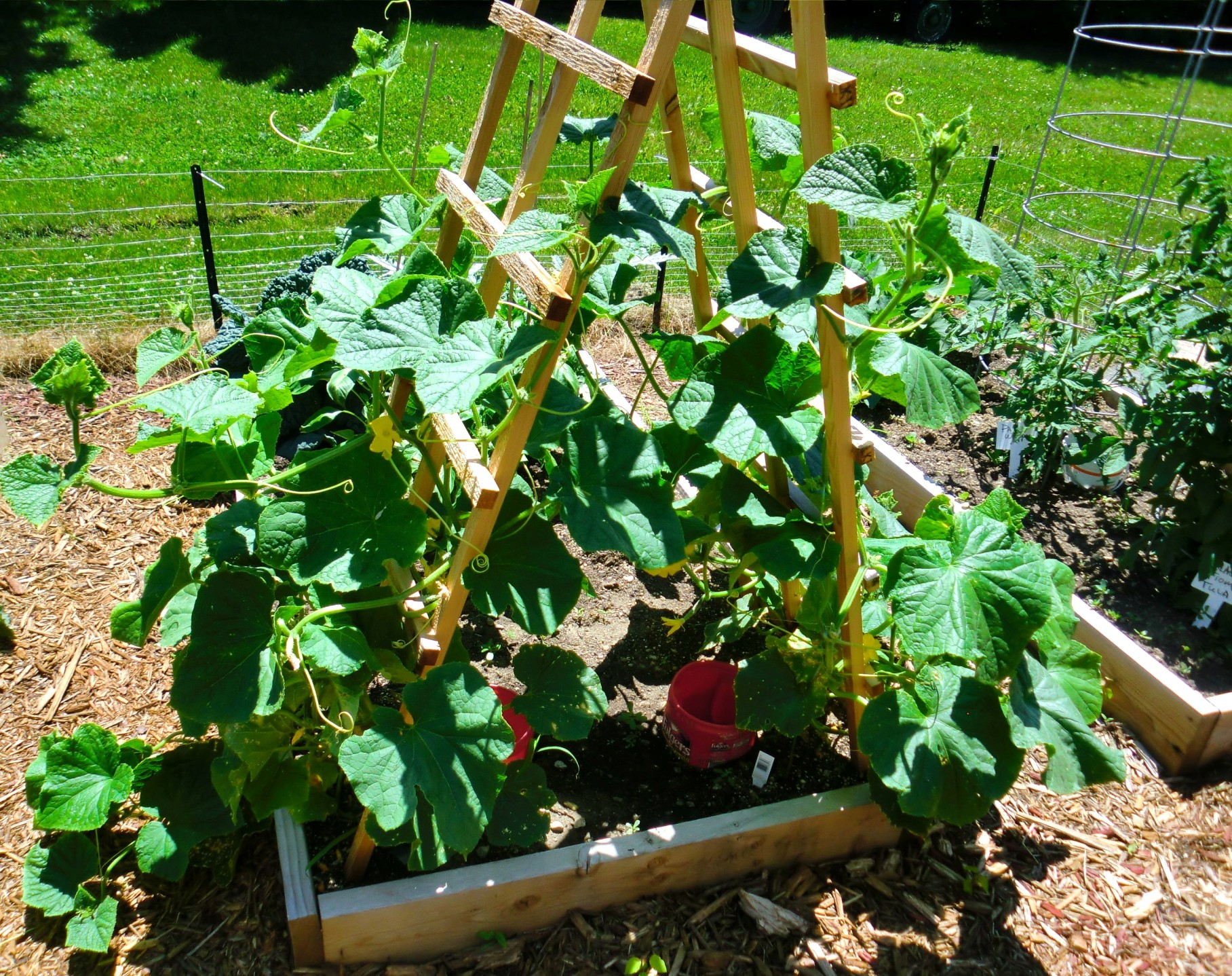 Growing cucumbers for Planting a garden