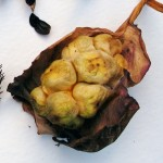 dried calla lily seed pod
